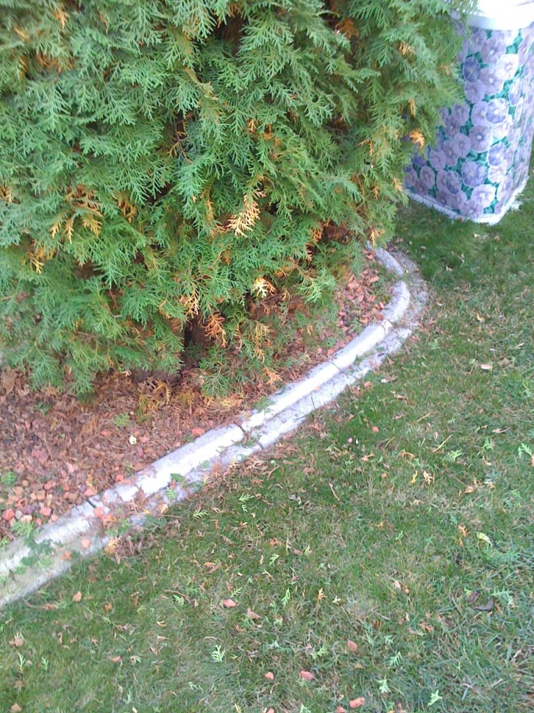 Old Curb- 19 years